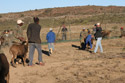 Karoo Stud Game Services